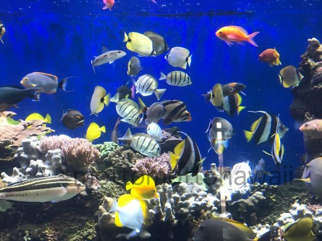 ワイキキ水族館水槽