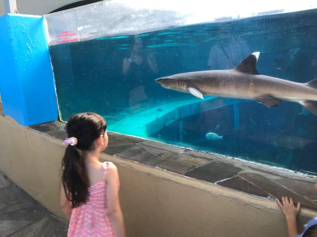 サメが泳いでます
