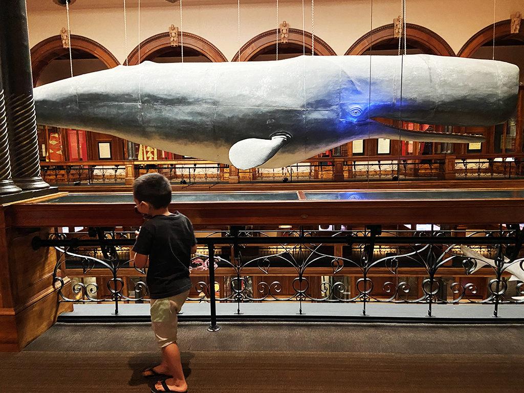 本館のクジラ